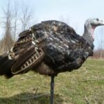 TURKEY DECOY WRAPS   BRING YOUR EXISTING DECOYS TO LIFE